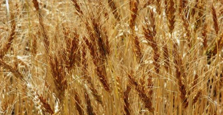Texas AgriLife Research and Bayer CropScience join forces to advance wheat research