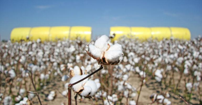 Historical revisions in world cotton stocks jolt the market