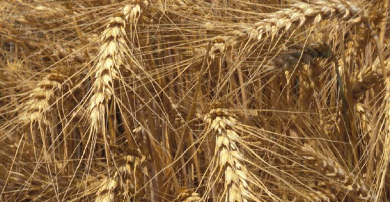 California Crop Weather: winter wheat off to good start