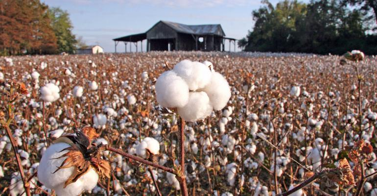 Seed companies release new 2012 cotton varieties