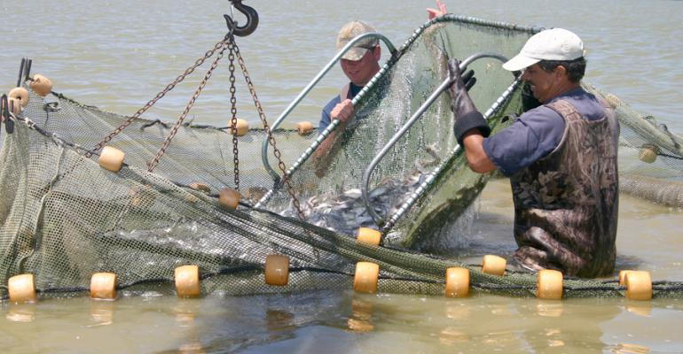 Aquaculture hot topics: Lacey Act overreach, seafood inspections