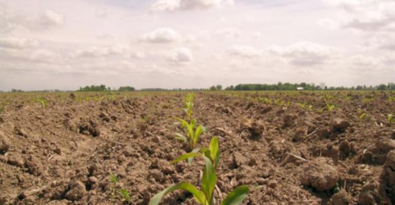 Corn planting at near record pace