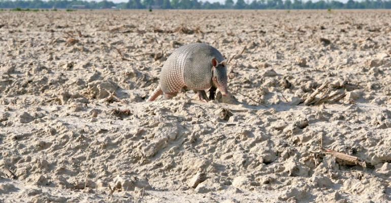Itrsquos an odd sensation picking up a liveandkicking armadillo by the tail mdash kinda like holding onto a jackhammer