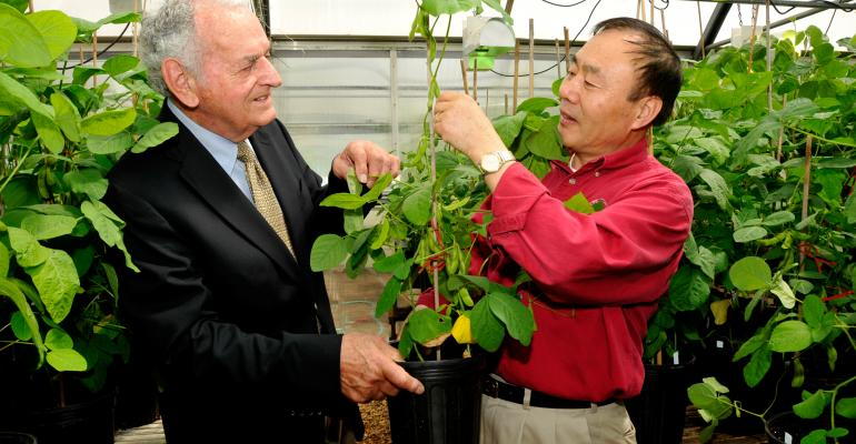 Joe Kirksey of Mulberry Ark left and soybean breeder Pengyin Chen examine bean pods from an edamame soybean plant in a University of Arkansas System Division of Agriculture greenhouse The division is releasing the first US variety of edamame It will be named UA Kirksey to honor Kirkseyrsquos leadership in the soybean industry