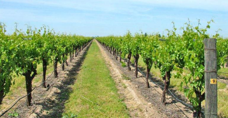 Vineyards of the future — think automation