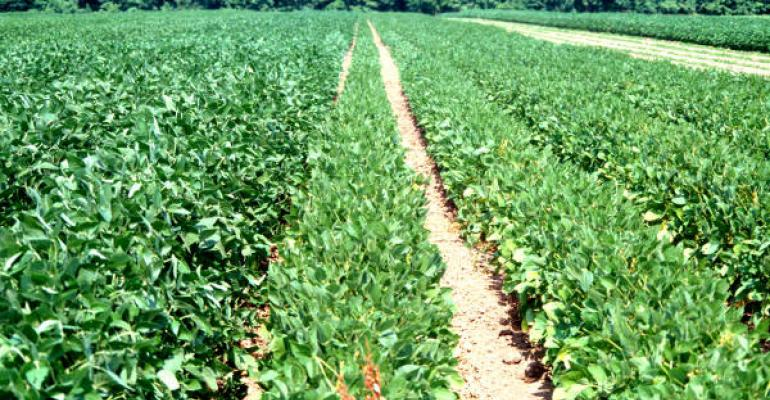 Very early planted indeterminate soybeans on the right work best in Texas according to Dr Travis Miller Texas AgriLife Extension Service program leader in College Station Plants were taller with the later planting dates on the left but yields were not better
