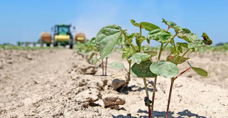Mississippi Delta begins long road to harvest