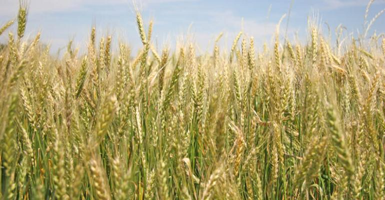 Vertical tillage increases wheat yields