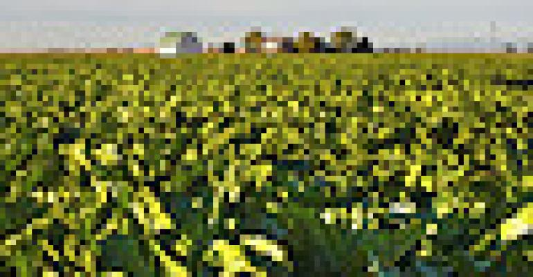 Senate Sweetens Farm Bill