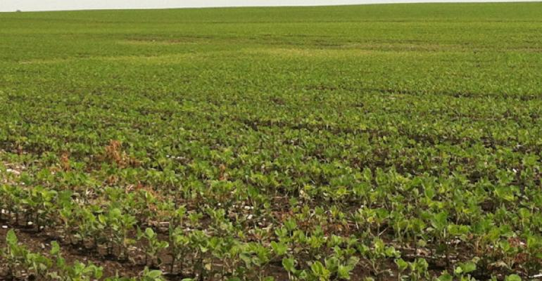 Corn, Soybeans Showing Signs of Potassium Deficiency