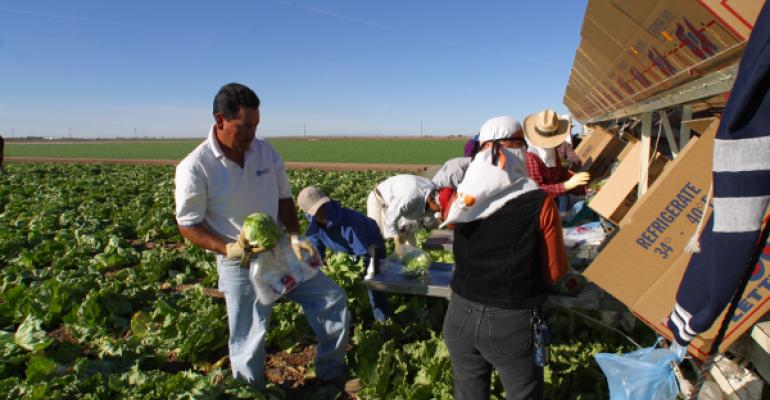 Immigration ruling renews agriculture's call for reliable labor law