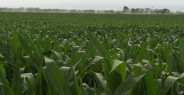 July 2012 WASDE: Corn Production Down, Yield Down 20 Bu./Acre