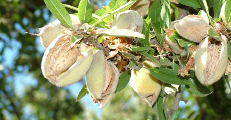 Tree nut growers scramble to meet Chinese demand