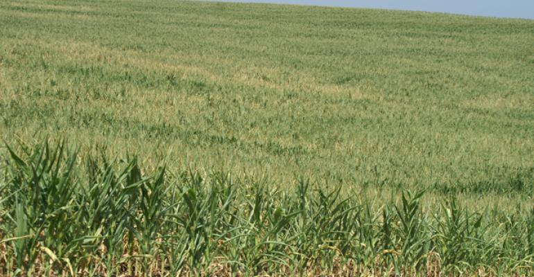Drought and the Illinois corn crop: Comparing 1988 and 2012