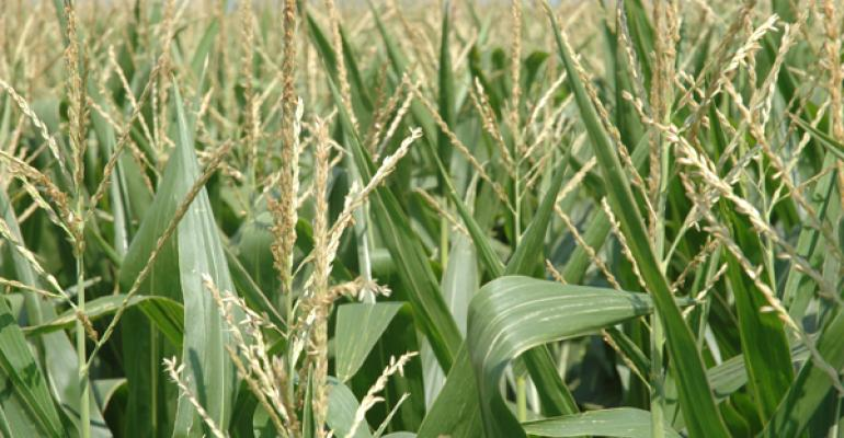 Corn production, stocks up slightly; soybean production up 16%, stocks unchanged