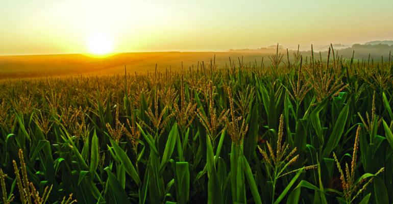 Seed companies under pressure to meet high demand for seed corn