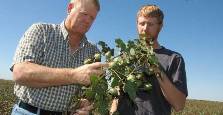 A LOADED COTTON STALK pleases Monty Kahle and his son Eric as they check crop prospects on the northern Oklahoma farm Cotton is an important rotation crop with wheat and corn for the Kahle operation