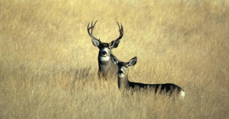 Definitive deer study targets rural property owners
