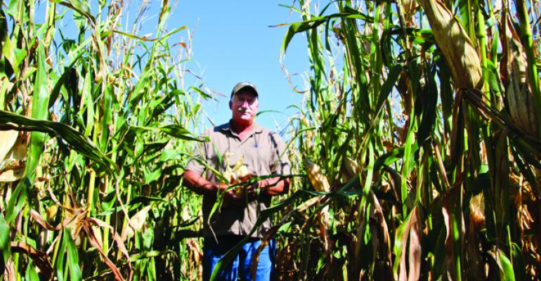 New Enogen hybrids produce more ethanol, profit for the grower