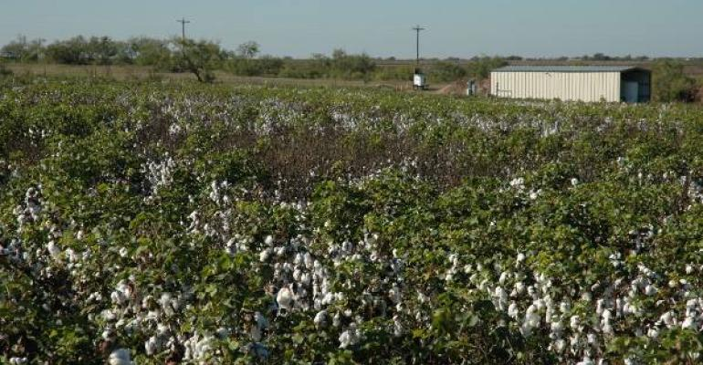 For more than 100 years cotton root rot CRR has been limiting cotton yields and lowering quality across parts of Texas New Mexico and Arizona