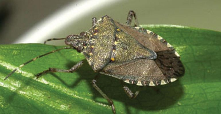 For Virginia farmers, close encounters of the worst kind as stink bugs invade