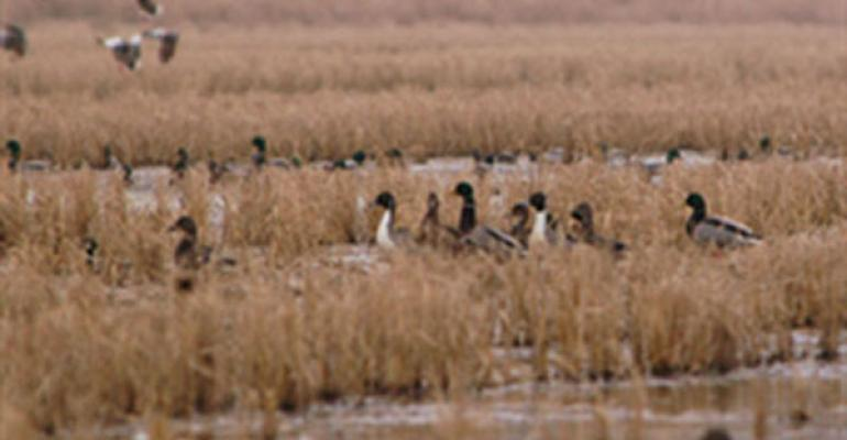 DU is encouraging the LCRA board to consider waterfowl and other wildlife needs when making water allocation decisions in Texas LCRA has passed an emergency order likely to provide enough water for first crop rice in some areas but not second crop rice a crucial food source for wintering waterfowl