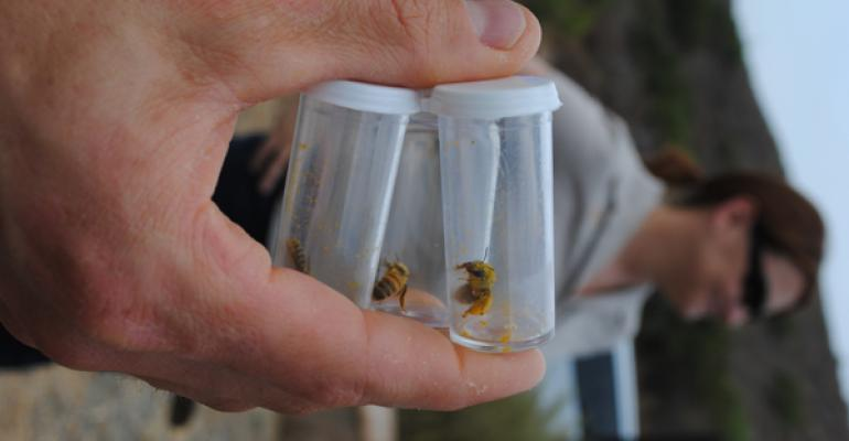 Can Bees Build Soybean Yields?