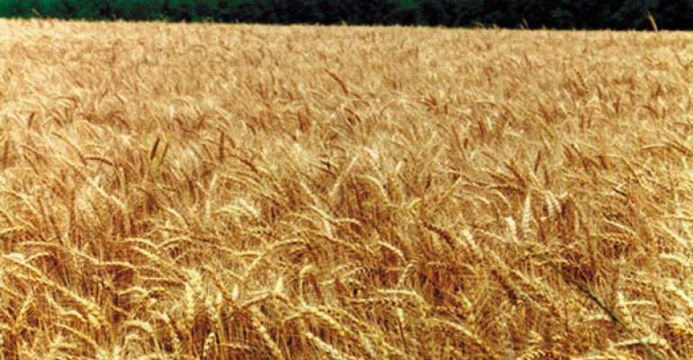 Higher wheat yields and better breeding to follow genome mapping?