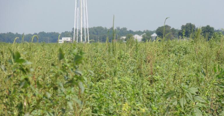 Glyphosate-resistant weed problem extends to more species, more farms
