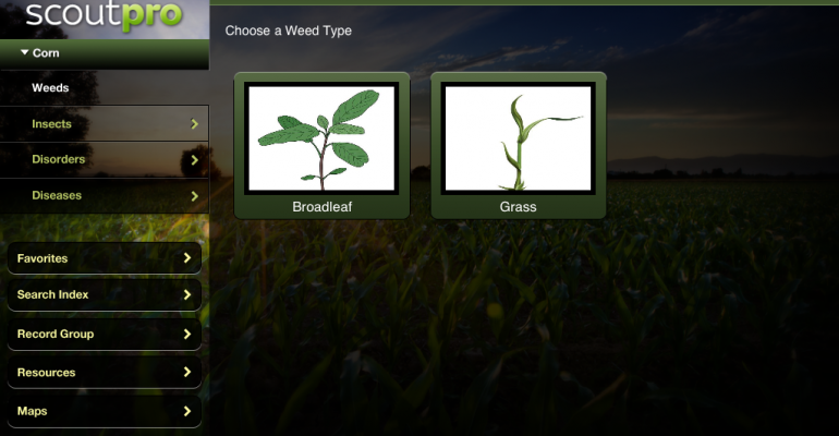 Improve Your Crop Scouting