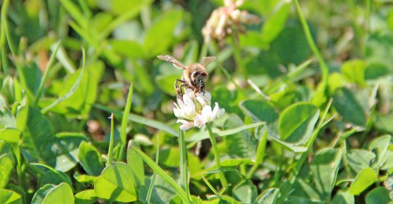 Pesticides on brink of ban over honey bee losses
