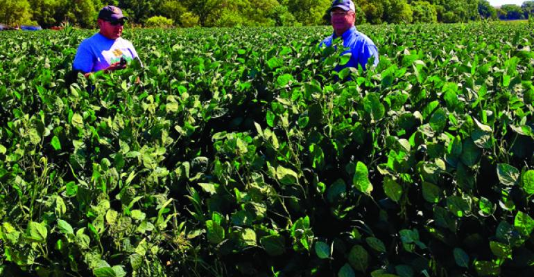 This soybean field in Nebraska was treated with Azospirillum a nitrogenfixing bacterium used to enhance plant growth