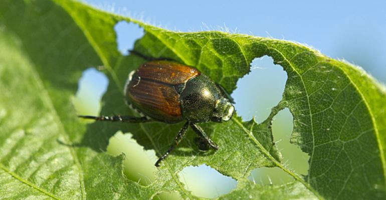 Worst pests in corn and soybeans: which insects to look out for in 2013