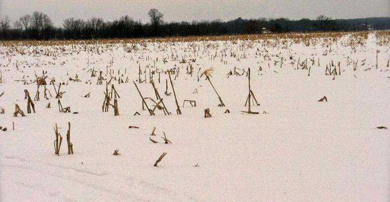Winter Weather Loosened Soil; No-Till a Viable Option