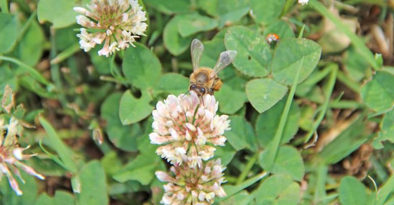 Pesticide battle over honey bee health under way