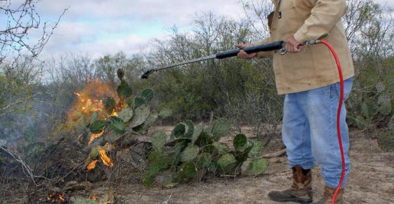Bill Barfield a South Texas cattle rancher near the Jim Hogg and Starr County line burns needles off cactus pads to feed to parched cattle