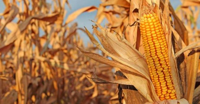10 key facts about GM crops