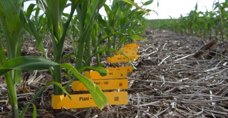Apply Quality Control to Corn Fields for More Consistent Yields