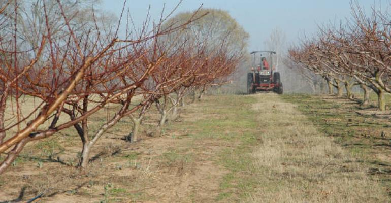 A Rusk County peach grower sprays oil on his trees to prevent disease