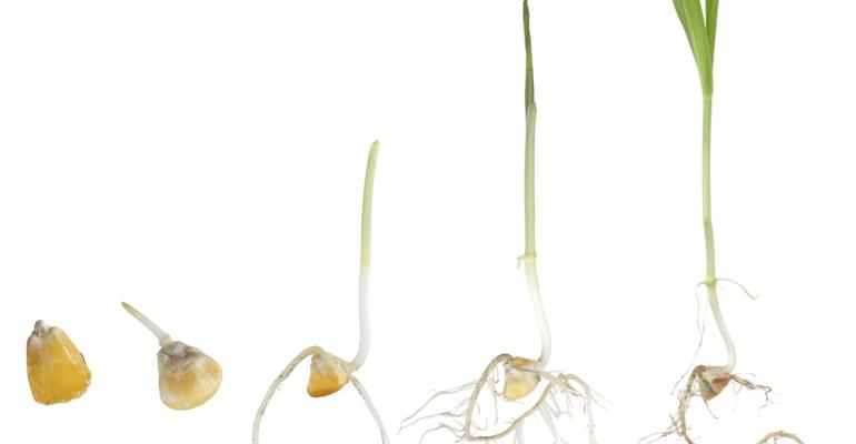 Seed Science: Seed Germination