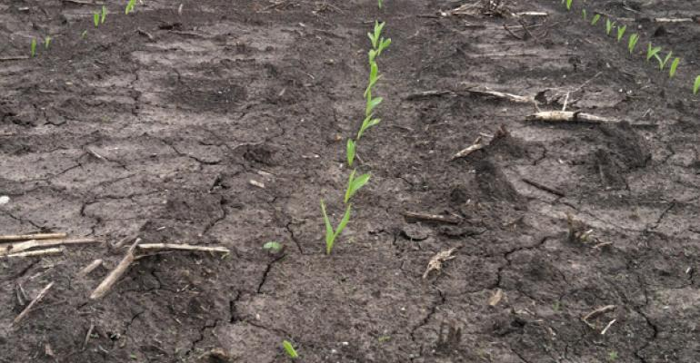 Time to evaluate corn emergence, stand