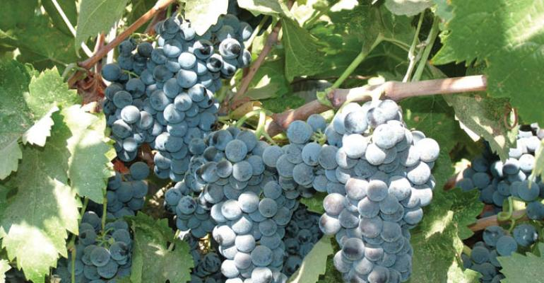 Grape powdery mildew survey a Farm Press, UC Davis effort