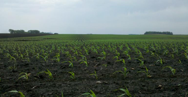 5 Tips to Get the Corn Crop Off to a Good Start