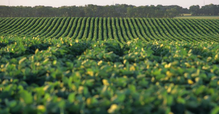 Keep an Eye on the Soybean Market
