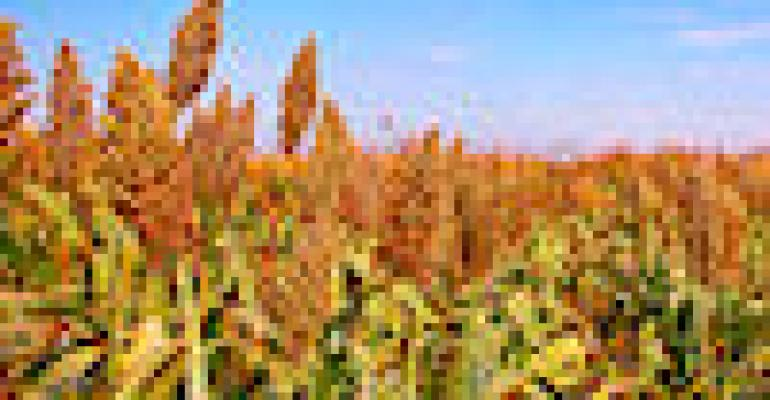 EPA Closes Comment Period on Sorghum as Biofuel