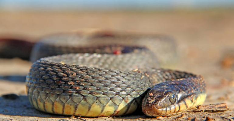 A HARMLESS WATER SNAKE is not a threat to humans but unless someone knows the difference between harmless and venomous snakes itrsquos best to leave them alone