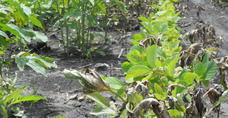 Post-Emergence Herbicide Application in Soybeans