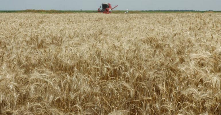 Despite drought freeze and hailstorms some areas still managed to harvest wheat for grain