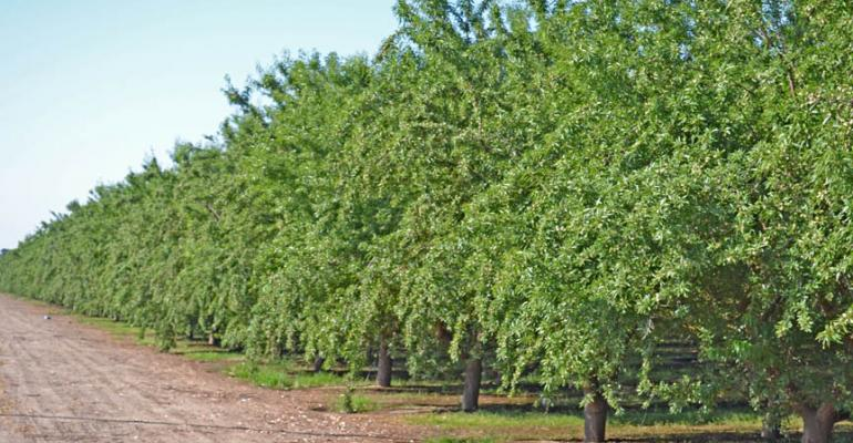 Almond market reacts to short crop estimate