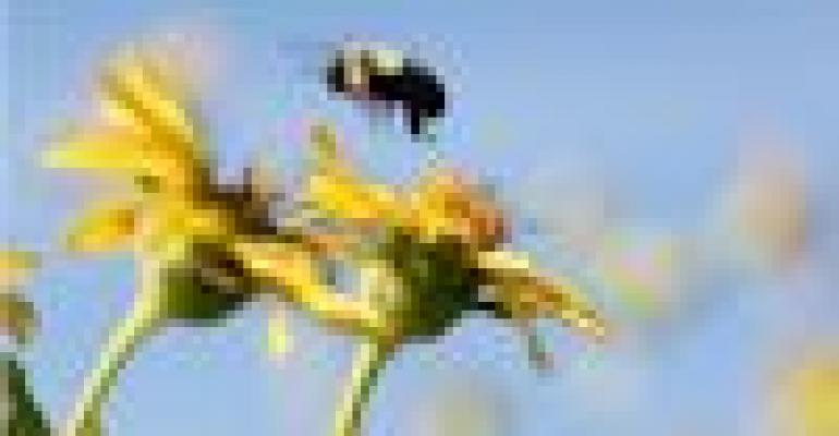 Use Best Practices To Protect And Promote Pollinators For Crops